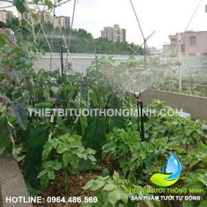 Thi công tưới phun mưa tự động cho vườn rau trên sân thượng cô Út