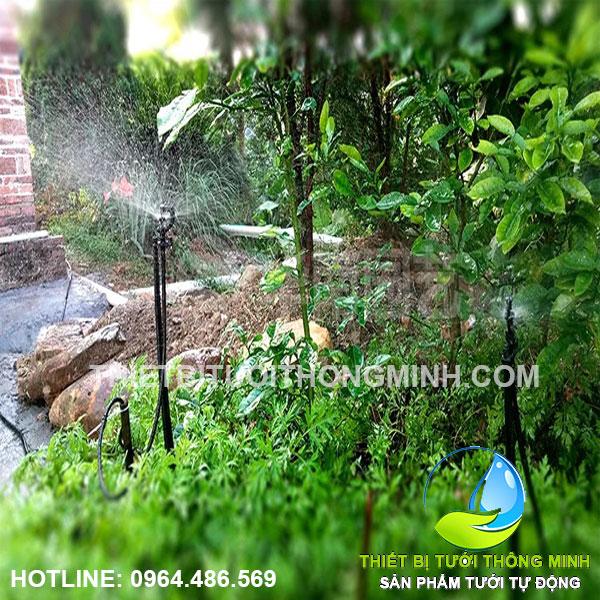 Lắp đặt tưới rau phun mưa trong vườn tự động nhà Cô 2 Hiền
