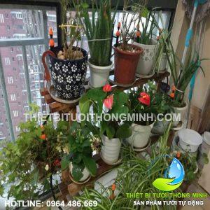 Lắp bộ tưới nhỏ giọt tưới cây cảnh trong phòng khách chung cư A.Kiệt