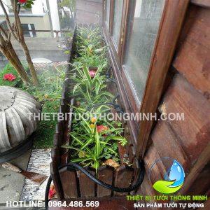 Tưới nhỏ giọt, phun sương bồn cây, chậu cây trong vườn nhà