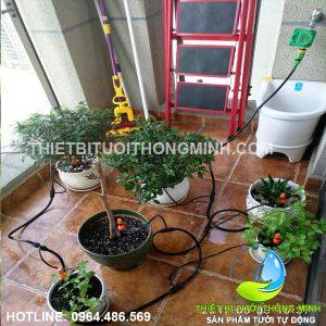 Lắp tưới tự động chậu cây cảnh sân thượng tưới thông minh