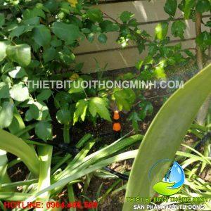 Tưới các chậu hoa, bồn cây trong vườn sân sau nhà tự động