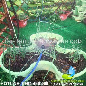 Lắp máy tưới cây tự động phun sương các chậu rau trên sân thượng cô 7 Hà
