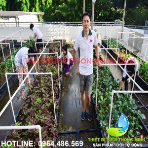 Tưới rau trên sân thượng hệ thống phun mưa tưới tự động ống nhựa 21