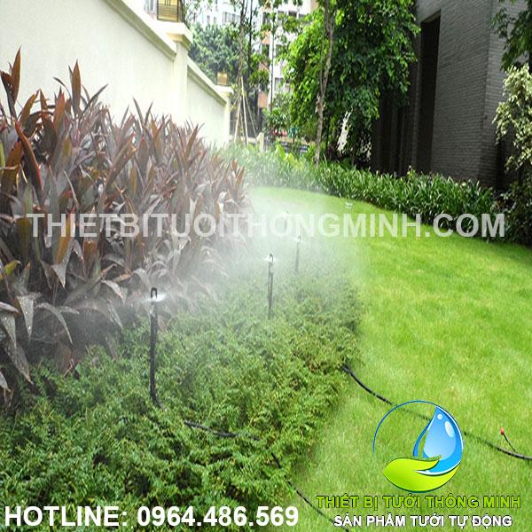 Tưới bãi cỏ biệt thự quận 7 nhà cô chú hùng hương