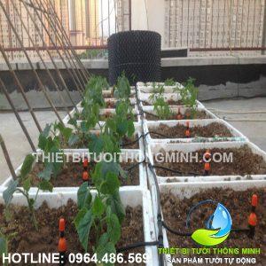 Khách hàng lắp đặt tưới thông minh khay rau trồng trên sân thượng