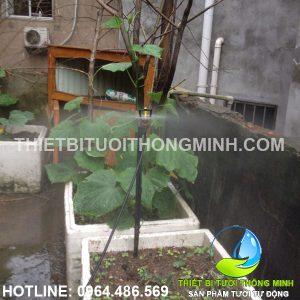 Lắp tưới phun mưa trồng rau bầu, bí tự động trên sân thượng chú Hé