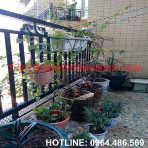 Lắp tưới cây tự động nhỏ giọt vào gốc nhà Bà Viết Bình Hưng Hòa