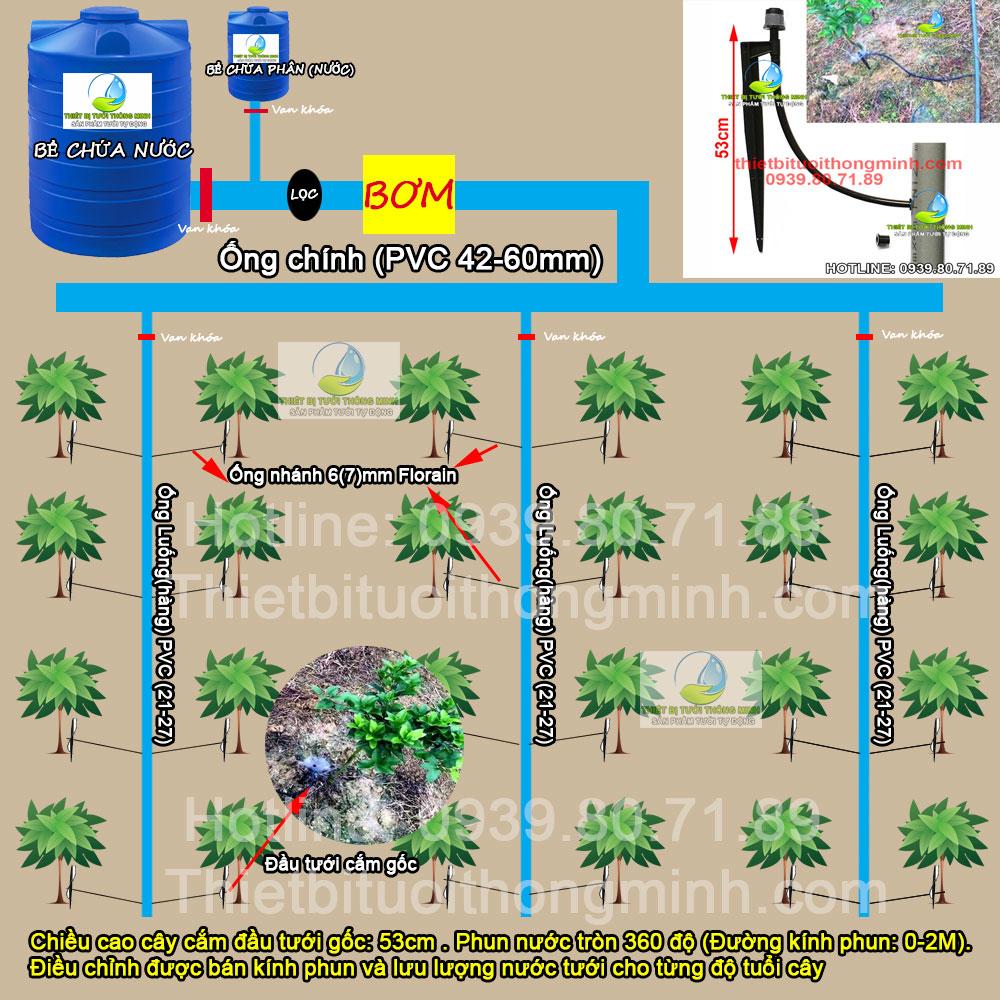 Hệ thống tưới cây ăn trái