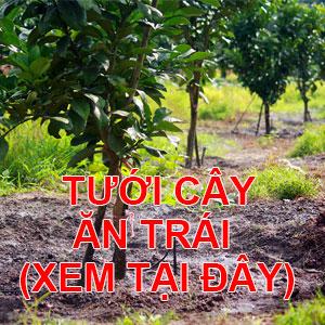 tưới cây ăn trái tự động