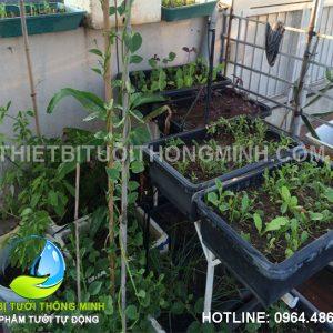 Lắp đặt tưới phun mưa tưới rau tự động sân thượng ở gò vấp