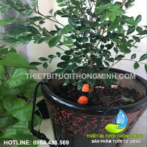 Tưới chung cư tưới nhỏ giọt các cây cảnh trồng ở ban công