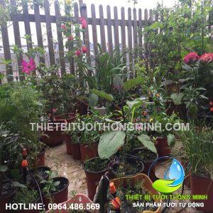Dự án lắp đặt tưới cây nhỏ giọt, sương tưới vườn cây trong vườn nhà