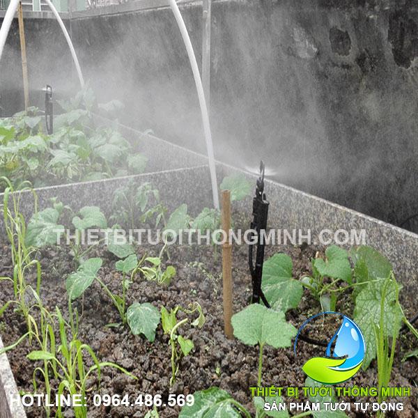 Lắp đặt tưới phun mưa trồng rau trong khay bê tông sân thượng