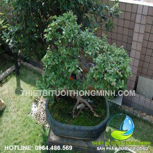 Lắp đặt tưới nhỏ giọt tận gốc các cây kiểng sân thượng trong nhà tự động