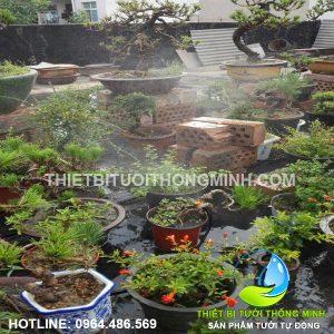 Lắp hệ thống tưới nhỏ giọt tưới cây kiểng trên sân thượng gia đình