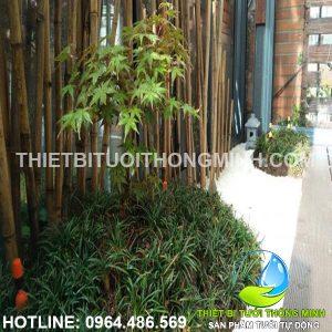 Lắp tưới nhỏ giọt vườn trúc tự động sân trước nhà phố