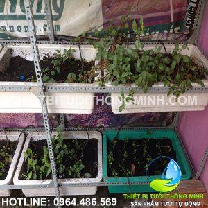 Lắp đặt tưới khay rau 3 tầng tự động vườn rau cô út Hạnh quận phú nhuận