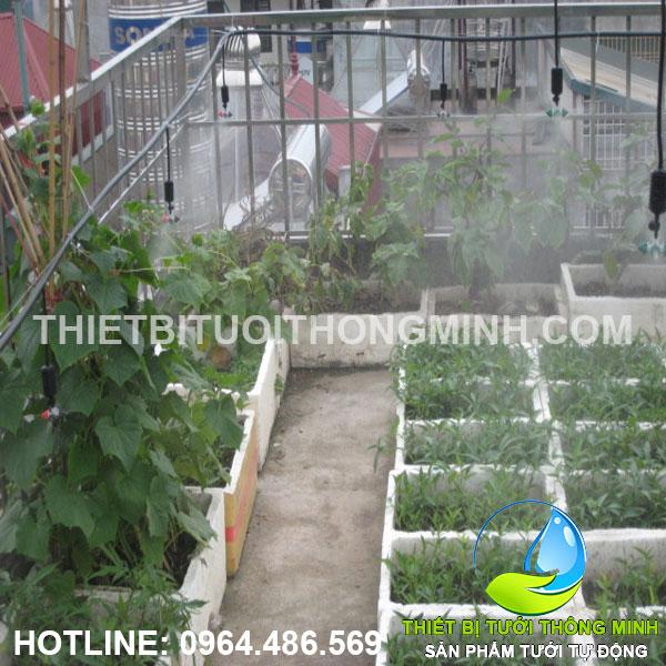 Lắp tưới phun mưa thả giàn 360 độ tưới các thùng xốp trên sân thượng cô Nghi