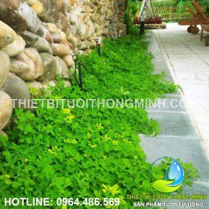 Lắp công trình tưới phun mưa 360 độ tự động sân vườn chú Hải QL1A quận 12