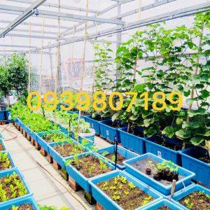 Lắp đặt tưới rau trên sân thượng, ban công tự động giá rẻ tại tphcm