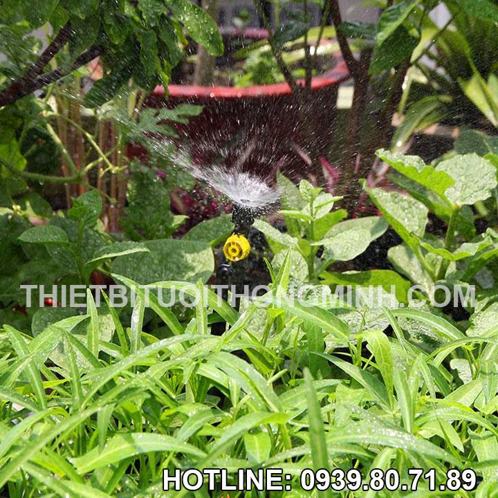 Tưới phun mưa cho rau