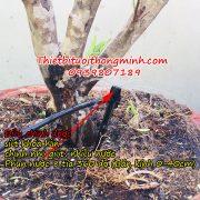 đầu tưới cắm gốc phun nước 8 tia
