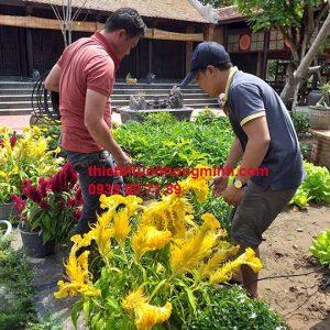 Lắp đặt hệ thống tưới phun mưa sân vườn biệt thự cổ long an
