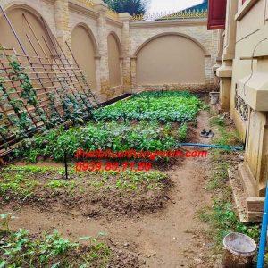 Lắp đặt hệ thống tưới vườn rau biệt thự hẹn giờ tự động quận 2 tphcm